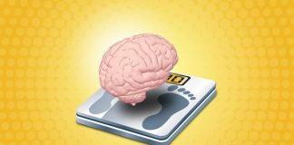 how much does a human brain weigh